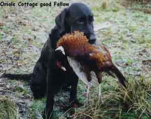 Oriole Cottage Good Fellow