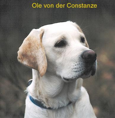 Ole von der Conatanze