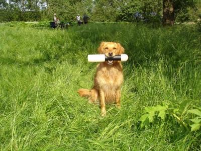 Bella Pippa of Oak Stub