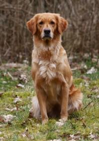 Cooper's Golden Brave Breeze