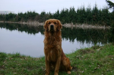 Woodlanddogs King of Jazz