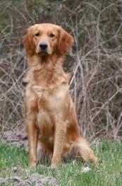Cooper's Golden Candid Crimble