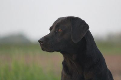 Gundog´s Choice Eve