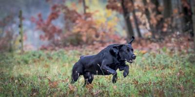 Gundog´s Choice Flint