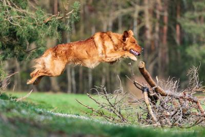 Eager Ebbe From Just Goldens